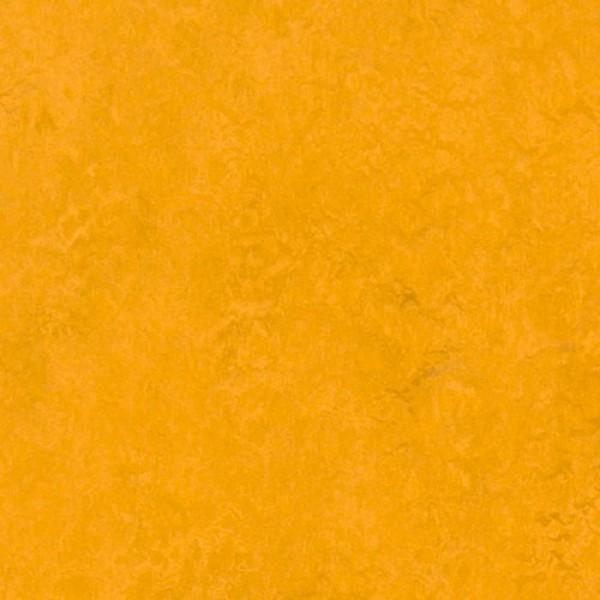 Forbo Marmoleum Dual Golden Sunset